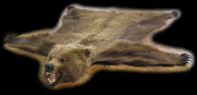 we always have a good selection of newly made grizzly bear full head rugs in stock - Bear Rugs