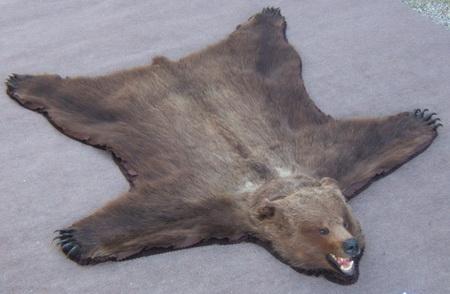 #B 864 Grizzly Bear Rug