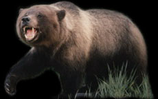 GRIZZLY-LOGO-PHOTO
